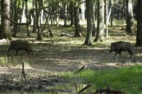 """Résultat de recherche d'images pour """"commission chasse"""""""